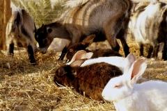 ארנבות בפינת חי